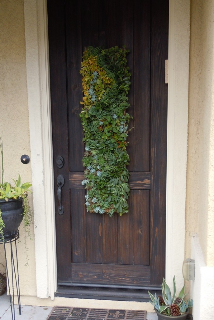 Cool idea succulent wall hanging yards gardens for Indoor succulent wall