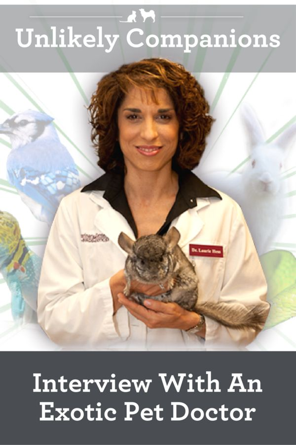 Unlikely Companions - Interview With an Exotic Pets Doctor. Dr. Laurie Hess talks about her experiences as a veterinarian who treats exotic pets and her new book. via @kristenlevine