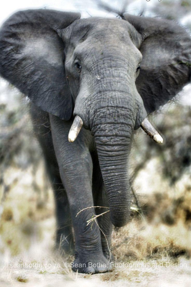 Wildlife by Sean Botha, Pongola early 2000's