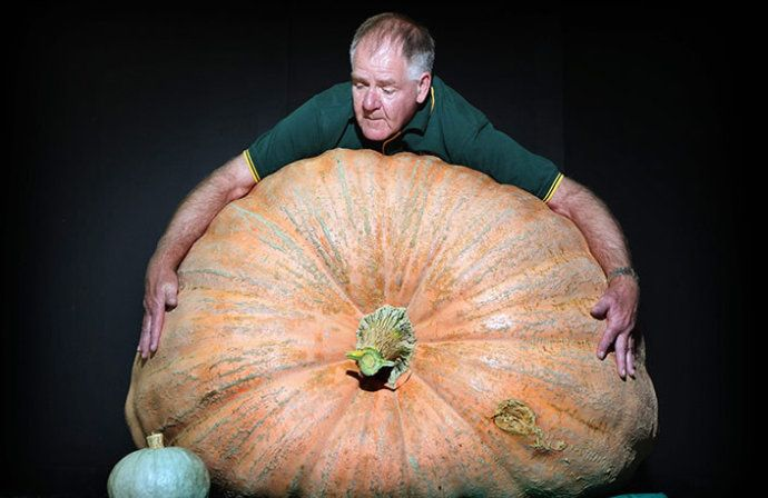 Wow! Giant pumpkin! :)