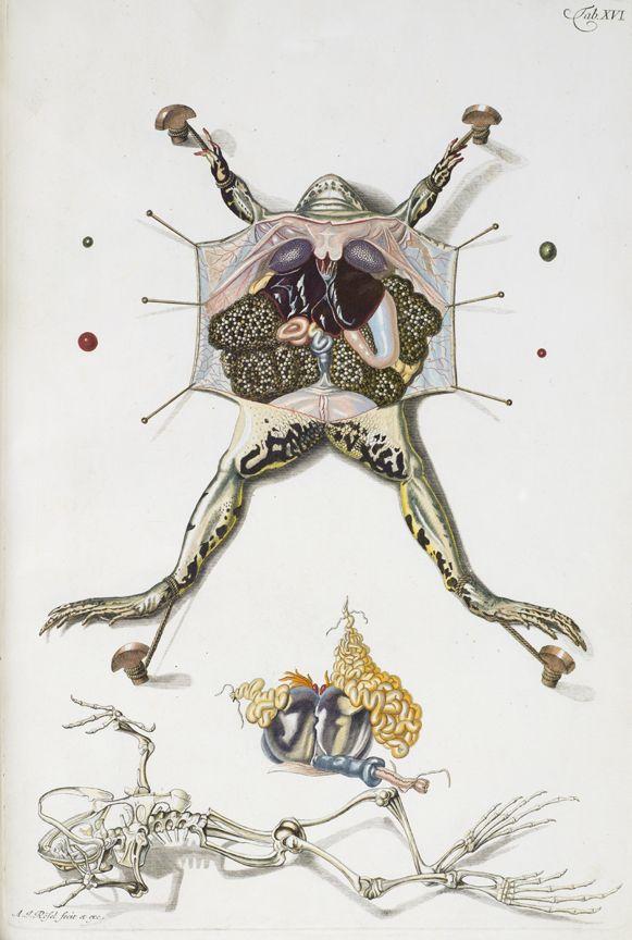 30 besten Vertebrate Zoology Anatomy Illustrations Bilder auf ...