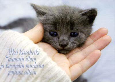 kissat_19.jpg