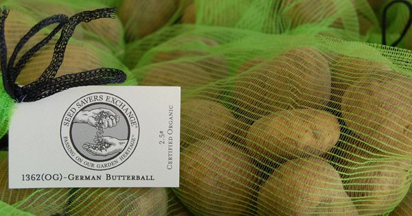 Tips from Seed Savers Exchange's gardening crew for a bountiful potato harvest.