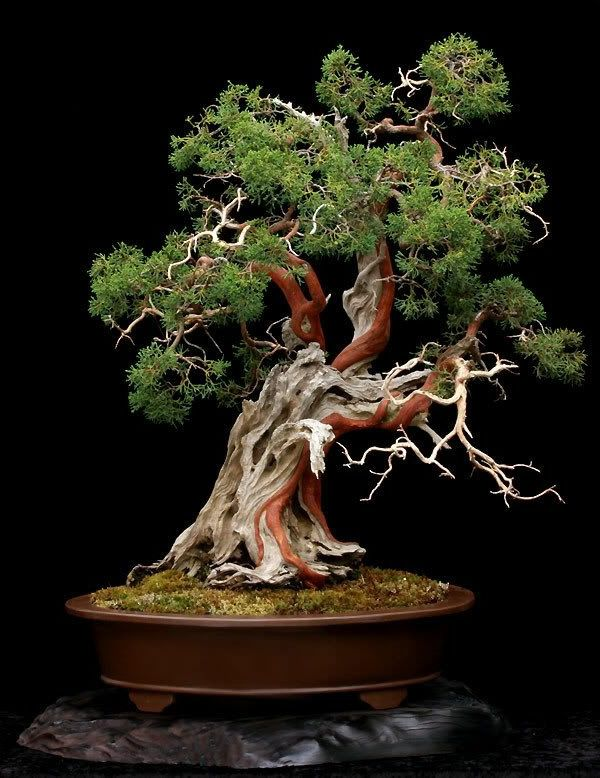 1000 images about amazing bonsai trees on pinterest for Unusual bonsai creations