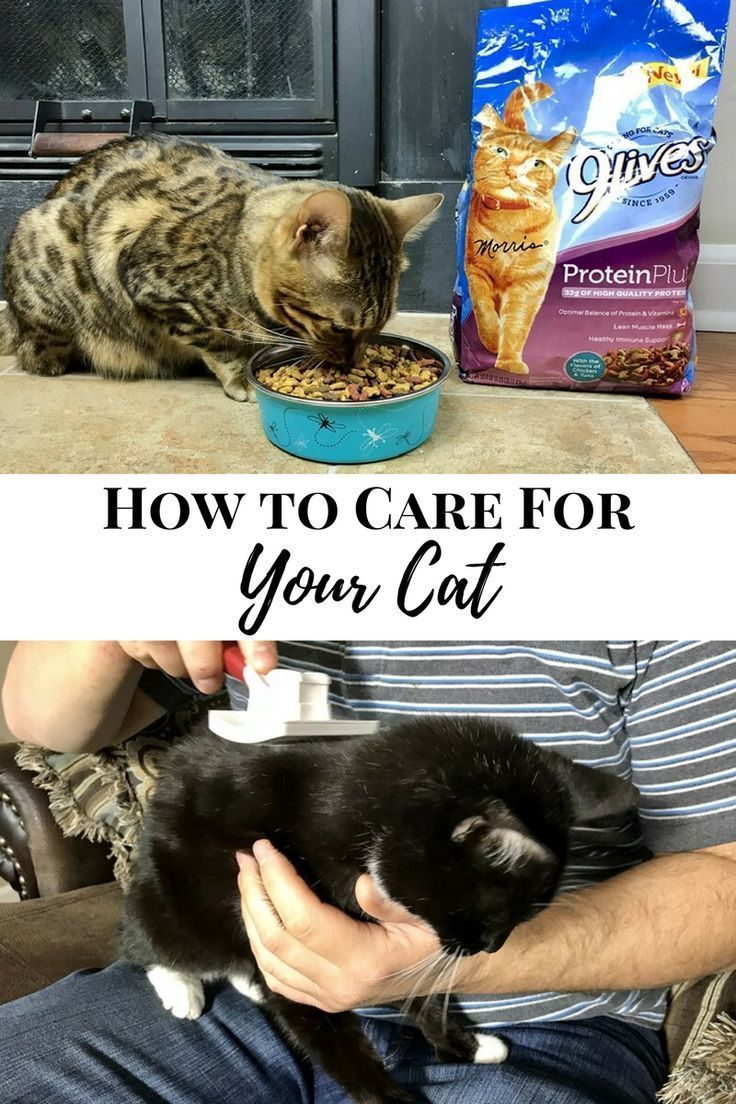 Need Some Help On How To Care For Your Cat Follow These Essential Cat Care Tips And Your Cat Will Be Looking And Feeling Gre Cat Care Cat Care Tips Cat