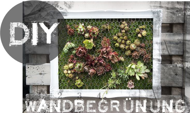 DIY Mini Wandbegr�nung