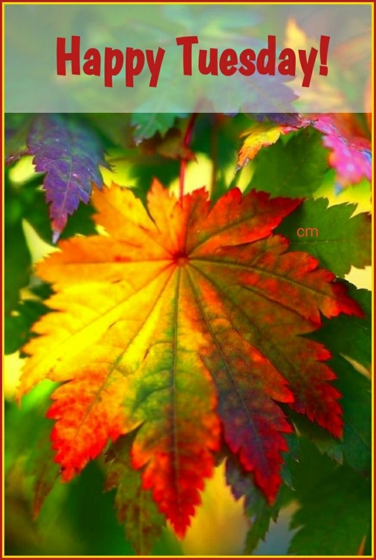 GOOD MORNING! HAPPY TUESDAY! GOD BLESS  #goodmorning #happytuesday #meme #blessed #happyhalloween #happyhalloween #memes #memesdaily #morningpost #goodmorningpost #good #morning #happy #tuesdaymorning #tuesday #tuesdaymemes #blessing #blessings #thegrind #morninggrind #autumn #fall #leaves #seasons