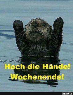 Hoch die Hände!