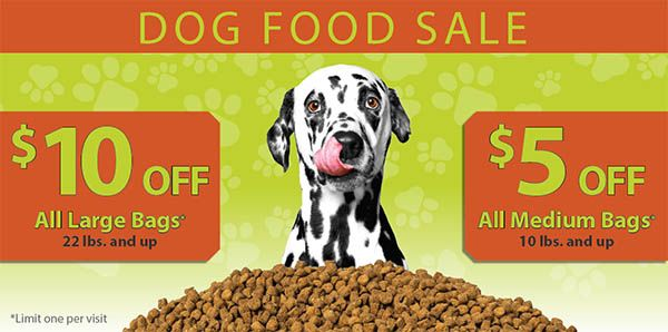 Dogs Puppies For Sale Petland Chicago Ridge Illinois Pet Store Puppies For Sale Puppy Adoption Dogs And Puppies