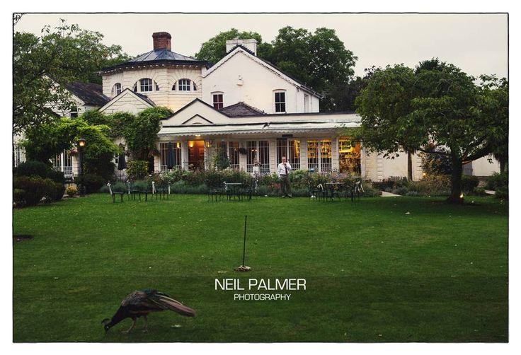 Monkey Island Hotel Wedding, peacock on the lawn #monkeyislandweddings