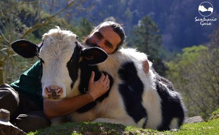 7 Fascinating Things You Never Knew About Cows :) <3