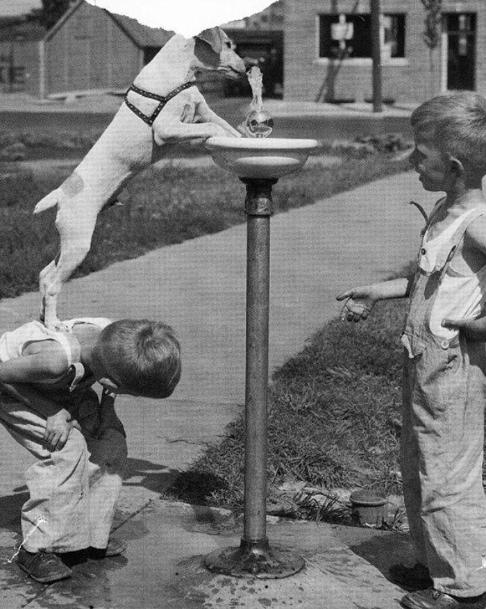 O Günlerden Bugüne Çocuk Olmak Pek Değişmemiş Diyeceğiniz Tarihi Fotoğraflar - En iyi arkadaşlar