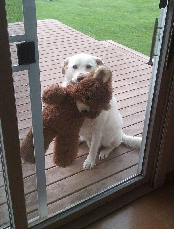 25 Animals Who REALLY Want You To Let Them Come Inside |