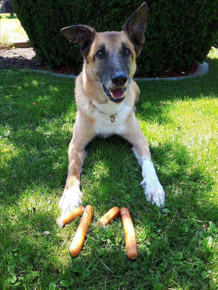 Hunde Foto: Tanja und Flash - Mit meine 11 Jahren immer noch fit wie ein Turnschuh Hier Dein Bild hochladen: http://ichliebehunde.com/hund-des-tages  #hund #hunde #hundebild #hundebilder #dog #dogs #dogfun  #dogpic #dogpictures