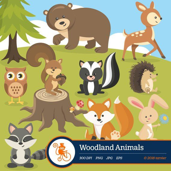 Woodland Animals Clip Art Forest Animal Clipart Images Royalty Free And Commercial Use Includes Fox Raccoon Deer Squirrel Bear Owl Rabbit Woodland Animals Animal Clipart Forest Animals