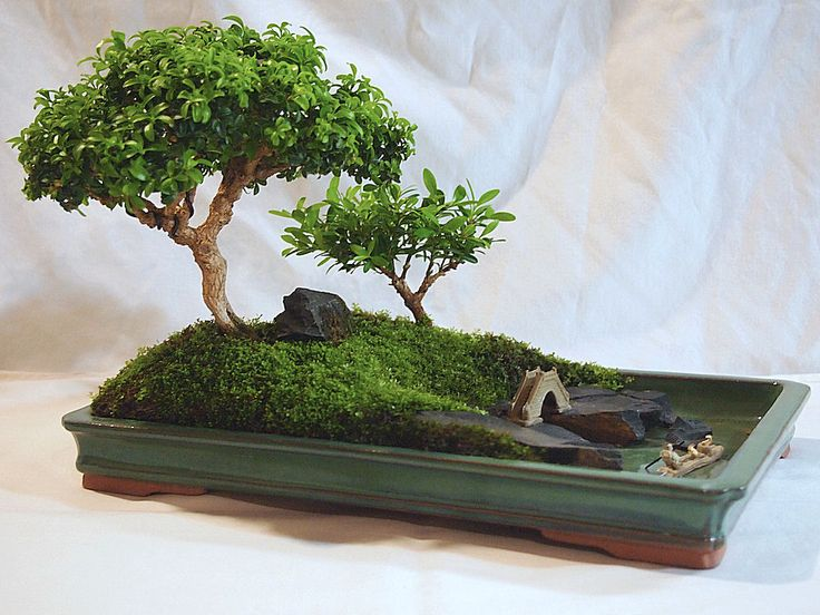25 best ideas about bonsai garden on pinterest bonsai. Black Bedroom Furniture Sets. Home Design Ideas