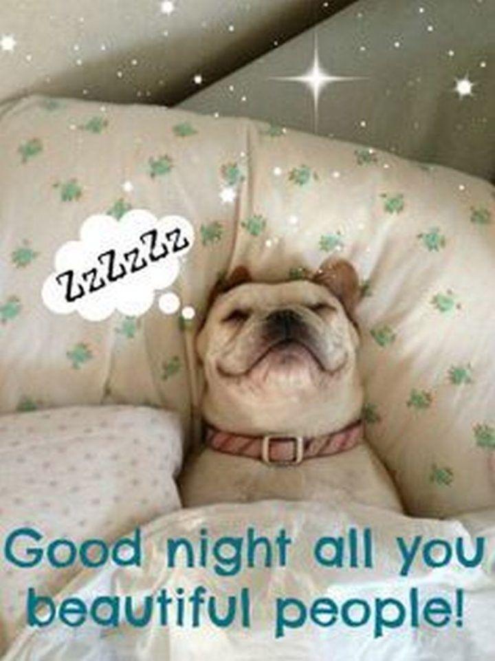 20+ Best Good Night Memes