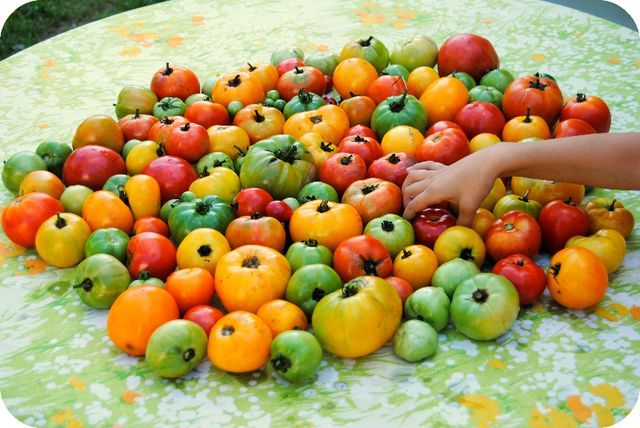 red yellow and green tomato harvest. @gardenmama.typepad.com Love the colors!Food And Drink