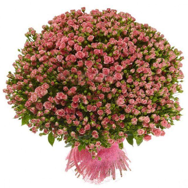 Доставка цветов оптом по санкт-петербургу где купить тюльпаны оптом харьков