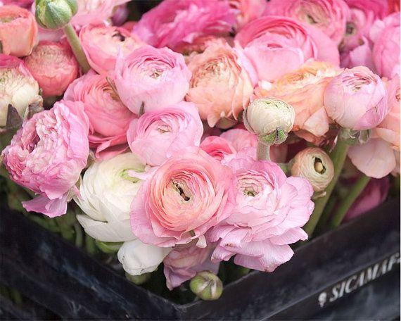 Paris Photography Pink Ranunculus Floral Wall