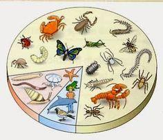 Guamodì Scuola: Gli animali: schede didattiche (vertebrati/invertebrati, respirazione, riproduzione, nutrizione)