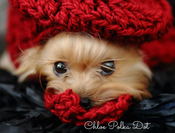 """~Home of Annie~ """"Our Little Rescue Yorkie""""                              …"""