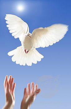 two loving white doves png | ... -and-doves-birds-dove-original-and-art-photo-gallery/love-white-dove