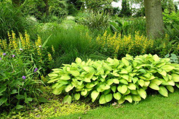 Jak obsadzić zacienione rabaty? Jak dobrać do nich odpowiednie rośliny?