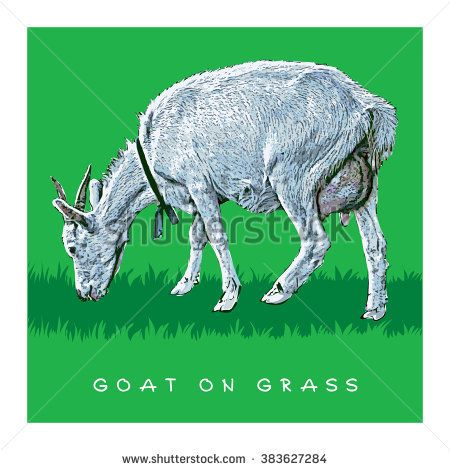Goat On Grass. Colored Vector Illustration.