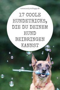 17 coole Hundetricks, die Du Deinem Hund beibringen kannst – jana ludwig