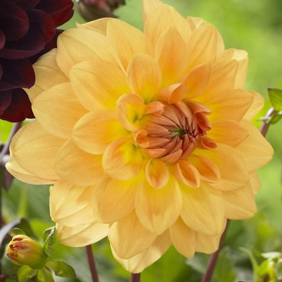 44 Best Images About In Bloom 9 13 15 On Pinterest Broom