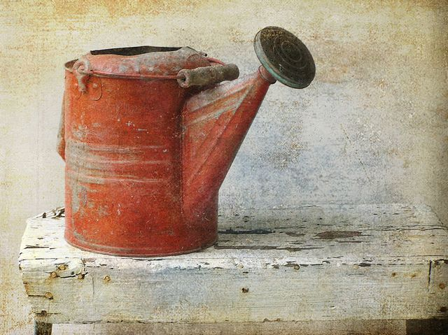 Red Watering Can on old weathered chippy white bench: Ideas, Gift, Red, Bucket, Watering Cans, Garden, Photo