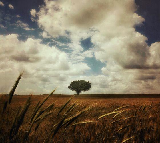 8 Tips For Incredible Rural Landscape Photography On Iphone Landscape Photography Best Landscape Photographers