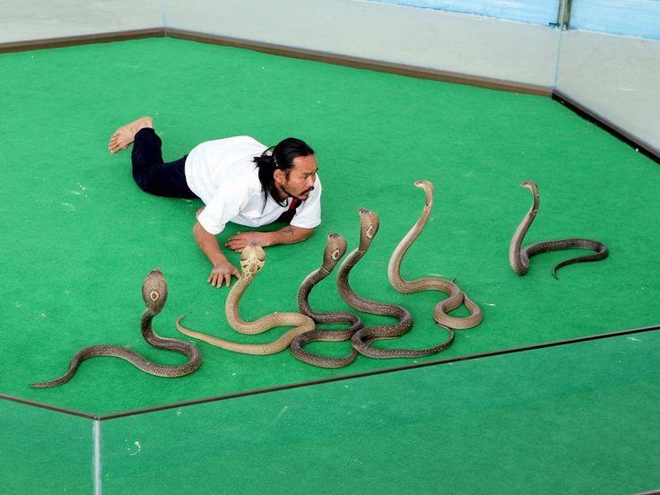 Змеиная ферма в Паттайе  Авиабилеты Москва - Бангкок от 24000 руб.  Змеиная ферма  это не только познавательная экскурсия но еще красочное интересное и леденящее сердце шоу. На ферме собрана огромная коллекция ядовитых и не ядовитых змей обитающих в Таиланде. Перед представлением русскоговорящий сотрудник фермы проведет экскурсию покажет собранную коллекцию змей.   Также расскажет о каждом виде об опасности каждой змеи и как избежать укуса а также о лечебных свойствах ядовитых змей. Основные…