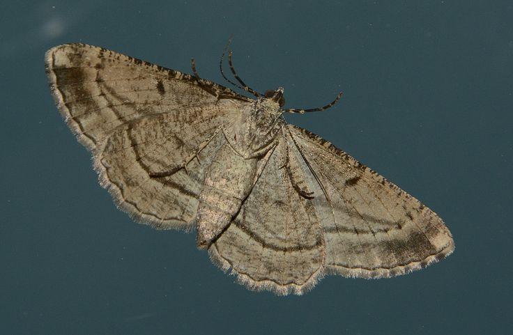 A visiting moth...