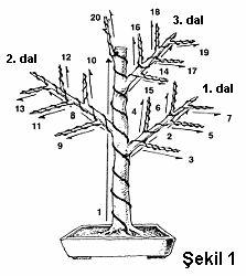 bonsai pino - Buscar con Google