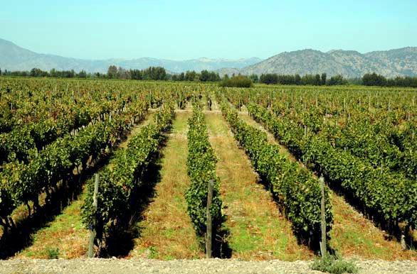 Vides de Colchagua - Rancagua - O´Higgins - Chile #places