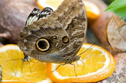 What do Butterflies eat and how to attract them to your garden