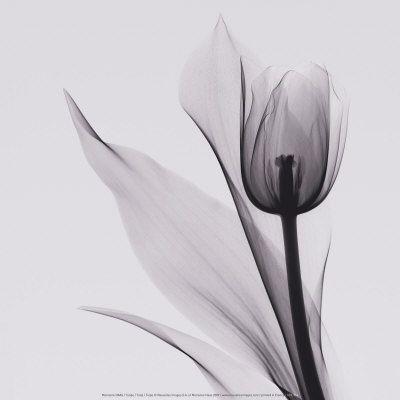Fotografia em preto e branco Posters na AllPosters.com.br