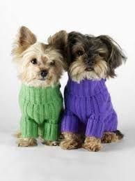 Resultado de imagem para croche e trico para cães e gatos