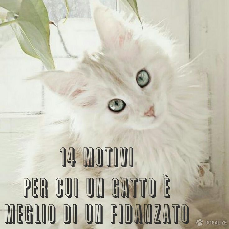 Dogalize - 14 motivi per cui un gatto è meglio di un fidanzato #gatto #cats #beautiful