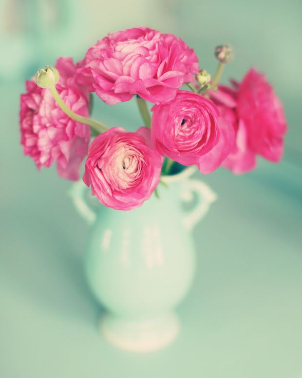 Ranuculus. . . My new discovery. I want to grow some along with peonies and dahlias for some gorgeous homegrown bouquets