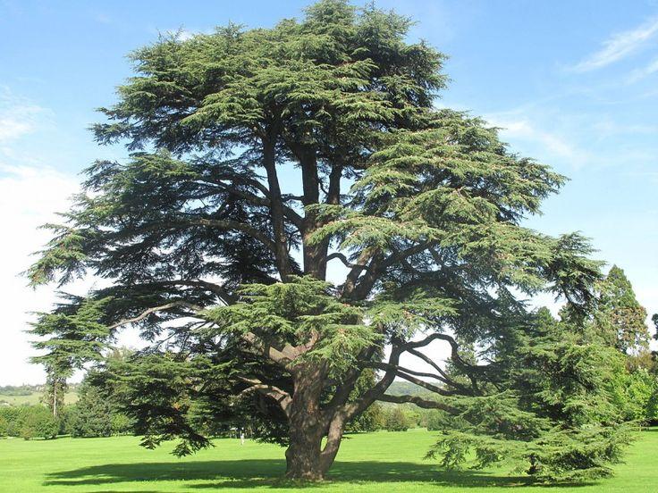 77.000 δέντρα στη Μελβούρνη έχουν το δικό τους ημέιλ, και όλοι θέλουν να τους γράψουν