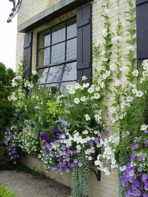 pretty window boxes | architectural details + container gardening