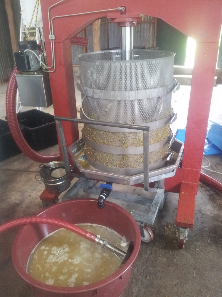Basket pressing Chardonnay at Girraween Estate #V13