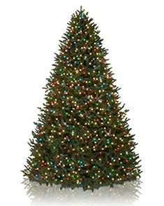 10 - 14 Foot Artificial Christmas Trees | Balsam Hill