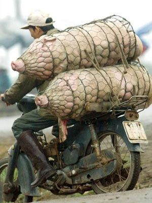 To market, to market to buy a fat pig....