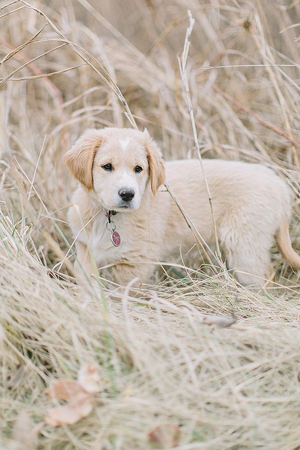 Pet Love: Maggi