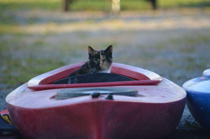 Kayaking kitteh