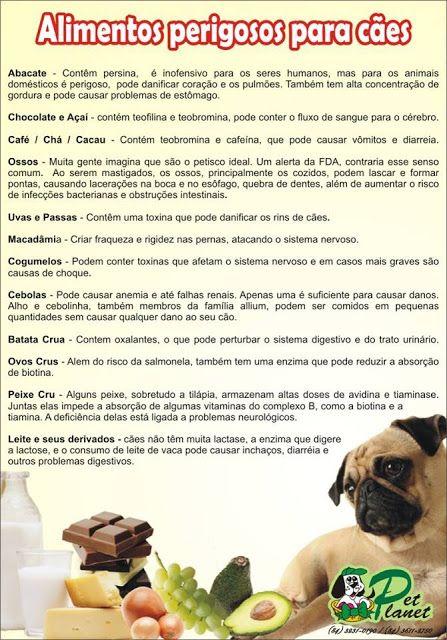 Quais alimentos são perigosos para os cães? E quais frutas são benéficas?